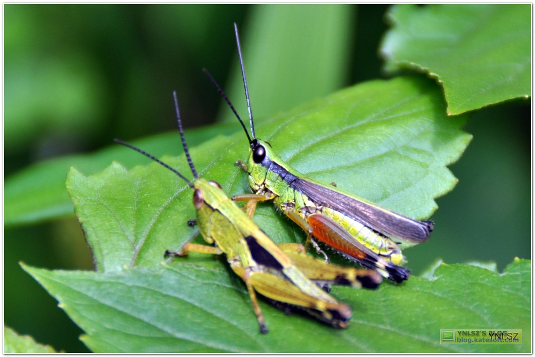 NIKON D90 拍摄的昆虫