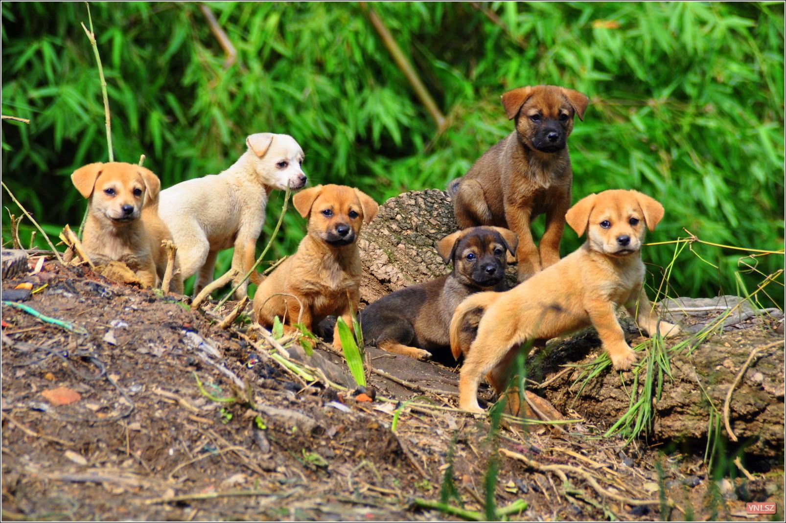 昆明金殿附近农村小狗照片