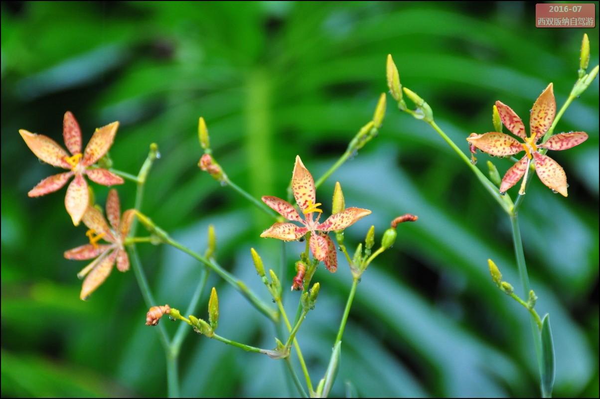西双版纳自驾游-勐仑中科院植物园